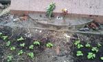 2012-03-09 16.35.51.jpg