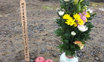 2012-03-10 12.42.06.jpg